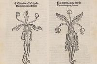 Mandrake Pair