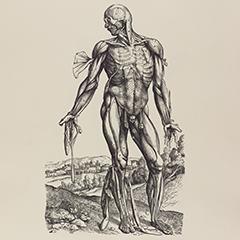Vesalius's De humani corporis Fabrica