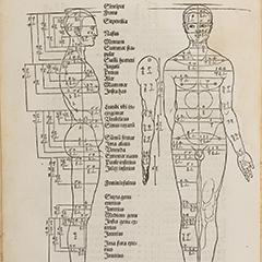 De symmetria partium in rectis formis humanorum